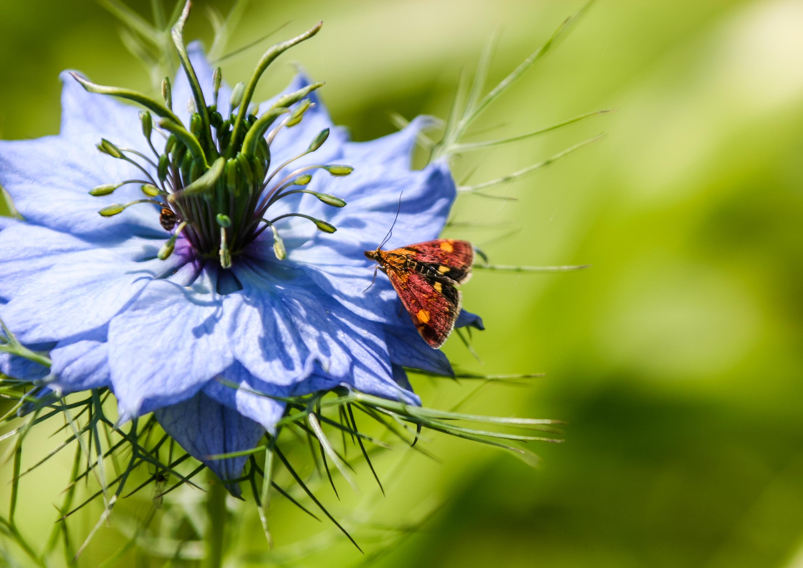 Onze B&B voor insecten