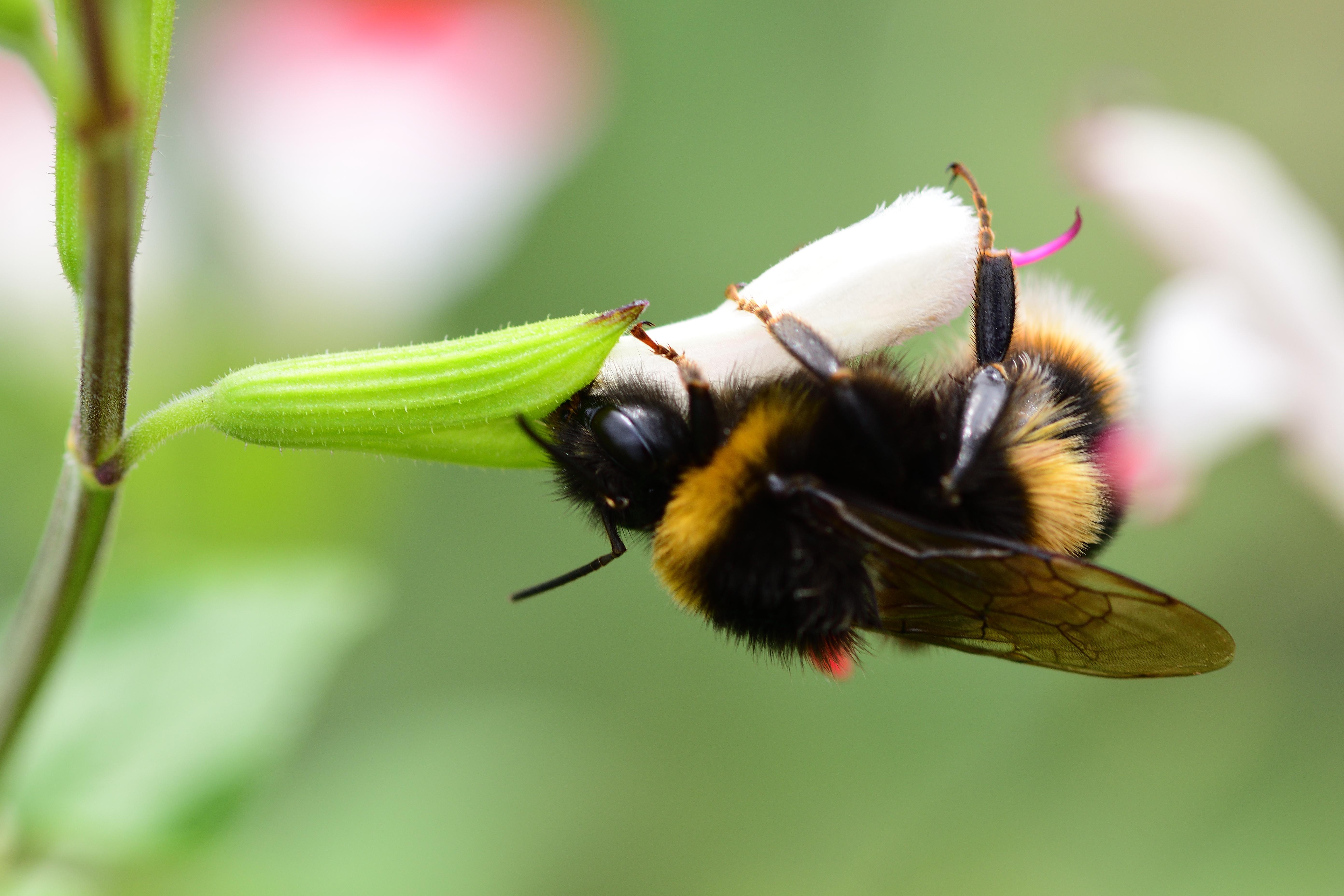 Alarm voor de (wilde) bijen
